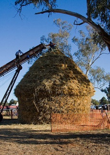 adding to the haystack
