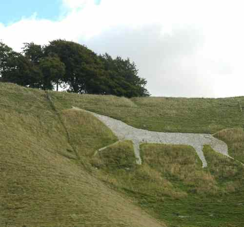 white horse on chalk